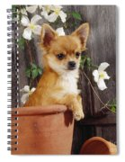 Chihuahua Dog In Flowerpot Spiral Notebook