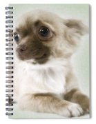 Chihuahua Dog Spiral Notebook