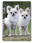 Chihuahua Dogs Spiral Notebook