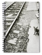 Chihuahua In Hanoi Spiral Notebook