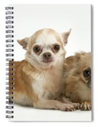 Chihuahua Puppy Dogs Spiral Notebook