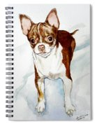 Chihuahua White Chocolate Color. Spiral Notebook