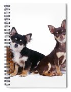 Chihuahuas Dogs Spiral Notebook