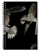 Chimney Swifts Spiral Notebook