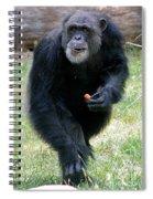 Chimpanzee-5 Spiral Notebook