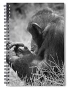Chimpanzee In Thought Spiral Notebook