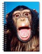 Chimpanzee Portrait Spiral Notebook