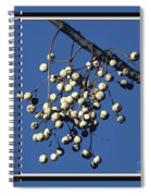 China Berry Cluster Spiral Notebook
