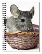 Chinchilla In A Straw Basket  Spiral Notebook