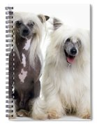 Chinese Crested Dogs Spiral Notebook