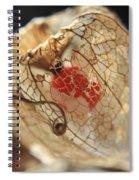 Chinese Lantern Plant - H Spiral Notebook