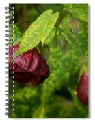 Chinese Lanterns Refreshed By The Rain Spiral Notebook