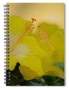 Chinese Rose Duo Spiral Notebook