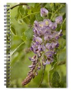 Chinese Wisteria Spiral Notebook
