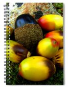 Chinquapin Harvest Spiral Notebook