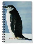 Chinstrap Penguin Spiral Notebook