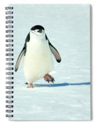Chinstrap Penguin Running Spiral Notebook