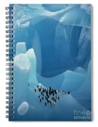 Chinstrap Penguins On Blue Iceberg Spiral Notebook