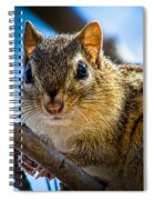 Chipmunk On A Branch Spiral Notebook