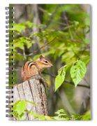 Chipmunk Shares Fence Post Spiral Notebook
