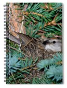 Chipping Sparrow On Nest Spiral Notebook