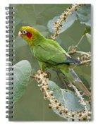 Chiriqui Conure 2 - Dp Spiral Notebook