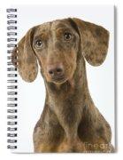 Chocolate Harlequin Dachshund Spiral Notebook
