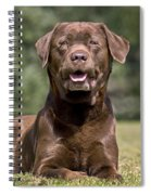 Chocolate Labrador Dog Spiral Notebook
