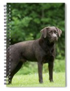 Chocolate Labrador Spiral Notebook
