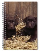 Chocolate Labrador Puppies Spiral Notebook