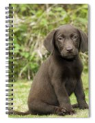 Chocolate Labrador Puppy Spiral Notebook