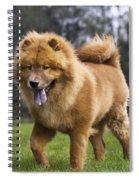 Chow Chow Dog Spiral Notebook