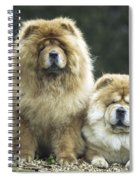 Chow Chow Dogs Spiral Notebook