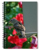 Chow Time At The Bird Feeder Spiral Notebook
