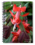 Christmas Cactus 1 Spiral Notebook