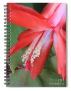 Christmas Cactus 3 Spiral Notebook