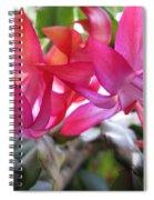 Christmas Cactus Schlumbergera Spiral Notebook