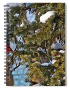 Christmas Cardinal Spiral Notebook