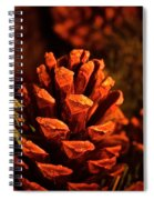 Christmas Cone Spiral Notebook
