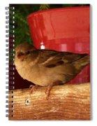 Christmas Finch Spiral Notebook