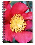 Christmas In A Flower Spiral Notebook