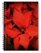 Christmas Poinsettias Spiral Notebook
