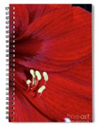 Christmas Red Spiral Notebook