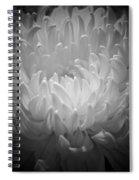 Chrysanthemum - 2 Spiral Notebook