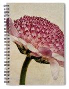 Chrysanthemum Domino Pink Spiral Notebook