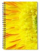 Chrysanthemum Flower Closeup Spiral Notebook