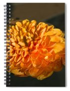 Chrysanthemum Gently Floating In The Fountain Of Campo De Fiori - Rome - Italy Spiral Notebook