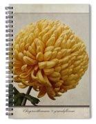 Chrysanthemum Grandiflorum Yellow Spiral Notebook