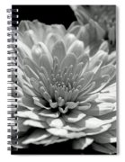 Chrysanthemum In Light And Shadow Spiral Notebook