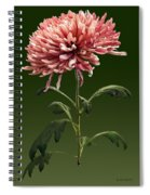 Chrysanthemum Shelbers Spiral Notebook